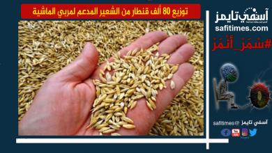 صورة إقليم آسفي.. توزيع 80 ألف قنطار من الشعير المدعم لمربي الماشية