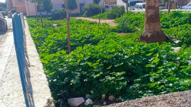 صورة حقائق صادمة عن صفقة المساحات الخضراء بآسفي (حدائق الخبيزة)