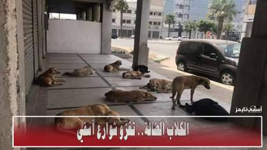 صورة انتشار الكلاب الضالة بشوارع مدينة آسفي يتحول إلى ظاهرة تقلق السكان